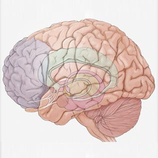 Acetyl L-Carnitine HCL: How it Works, Effects and Side Effects