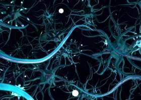 Food that increase brain memory photo 3